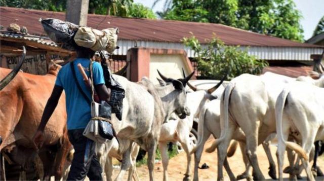 Herdsmen Receive Military Training In Ekiti- Ekiti Council Of Elders