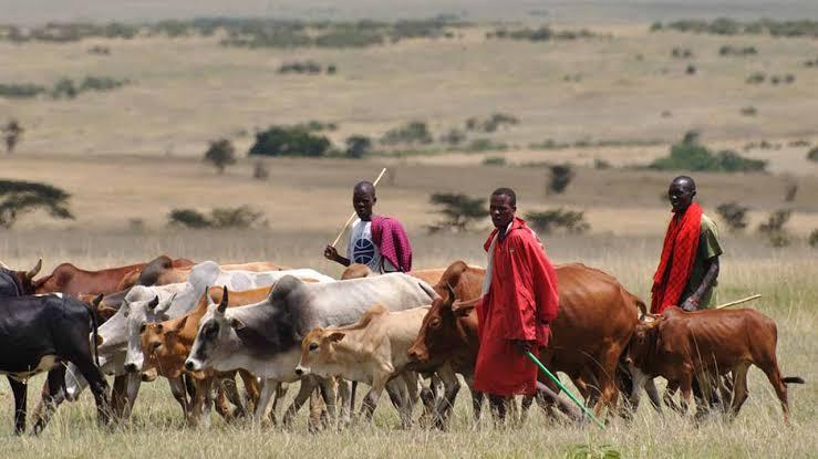 3 Herdsmen Killed In Anambra, 2 Community Leaders Detained.